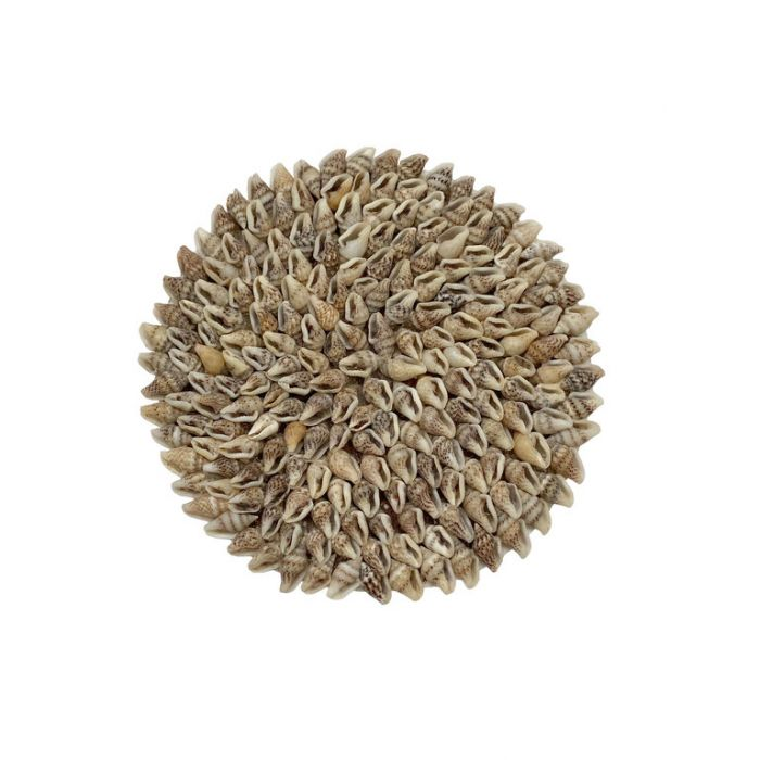 FP Collection Coaster Nassa Shell Natural  ] 185150 - Flower Power
