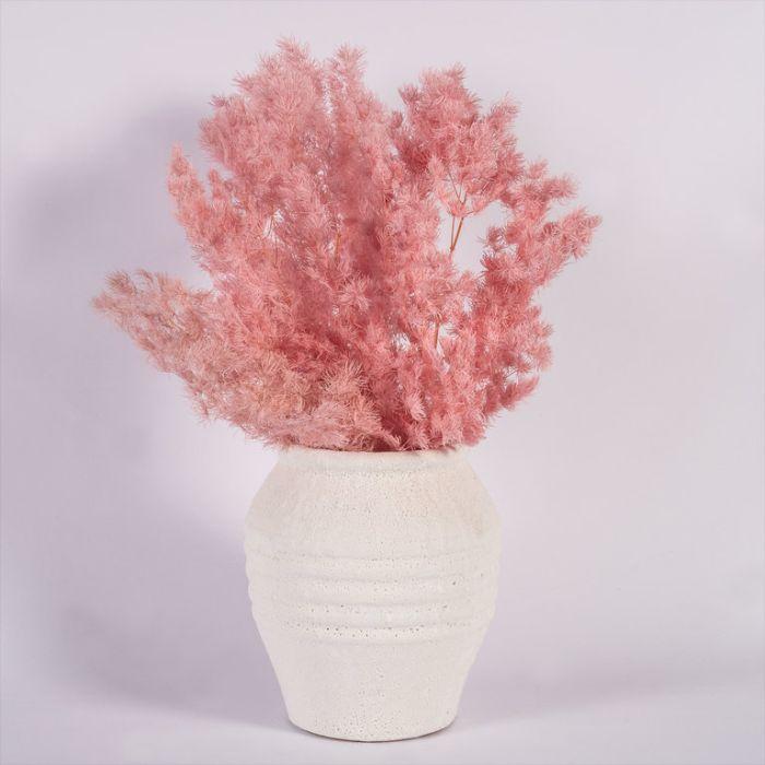 Dried Ming Fern Pink  ] 187994 - Flower Power