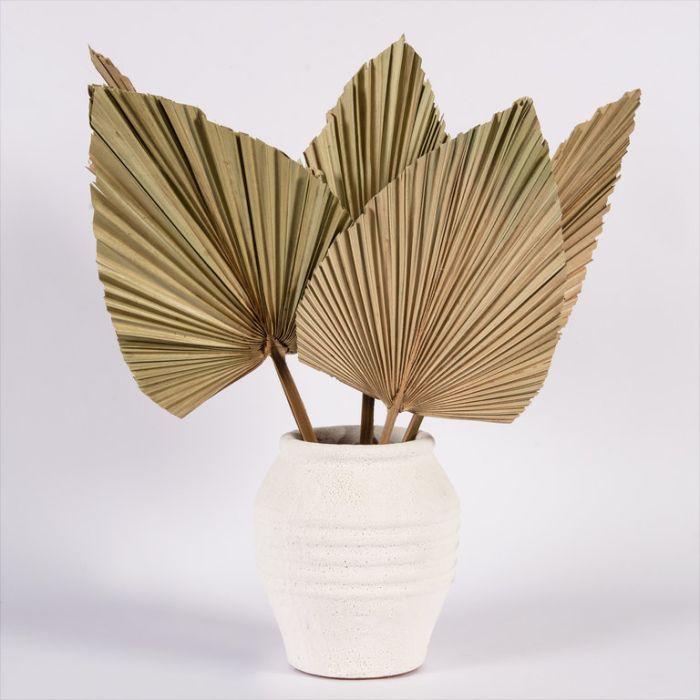 Dried Spear Palm Medium  ] 188000 - Flower Power