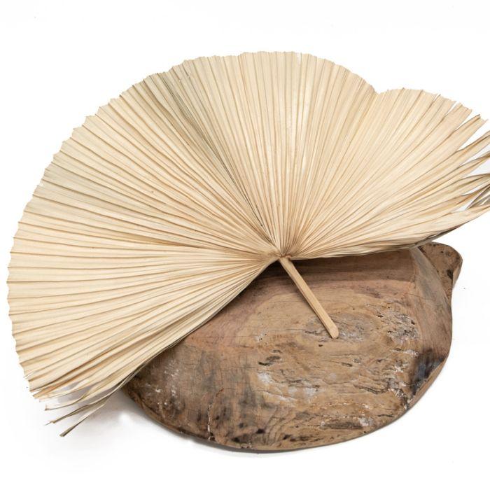 Dried Fan Palm Large  ] 189777 - Flower Power