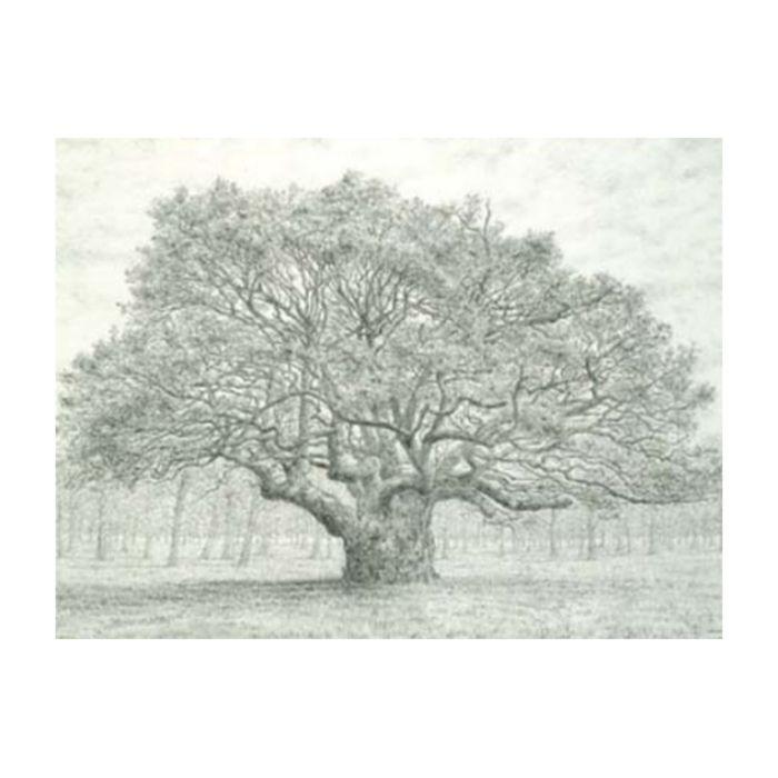 Almanac Gallery Oak Tree Card  ] 5019906700919 - Flower Power