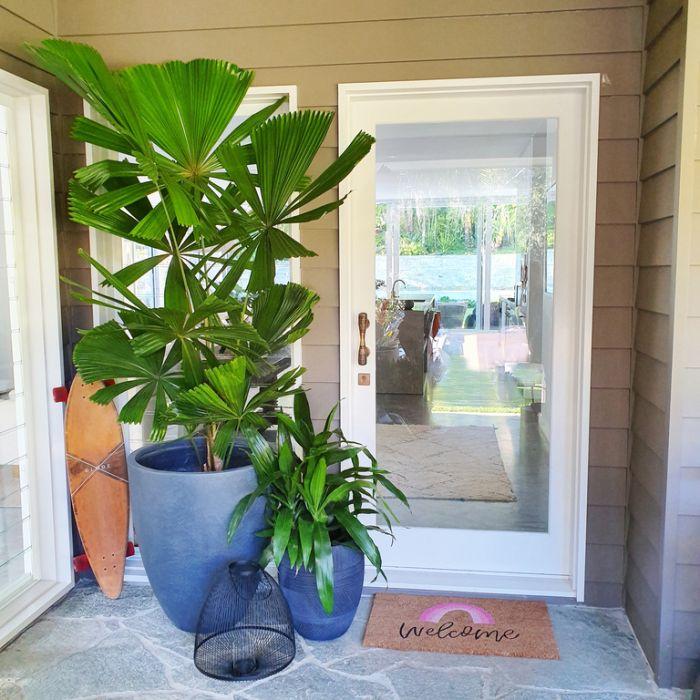 Australian Fan Palm  ] 703700P - Flower Power