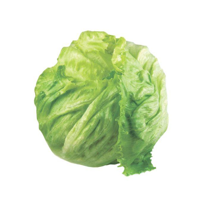 Lettuce Iceberg  ] 8335901002P - Flower Power