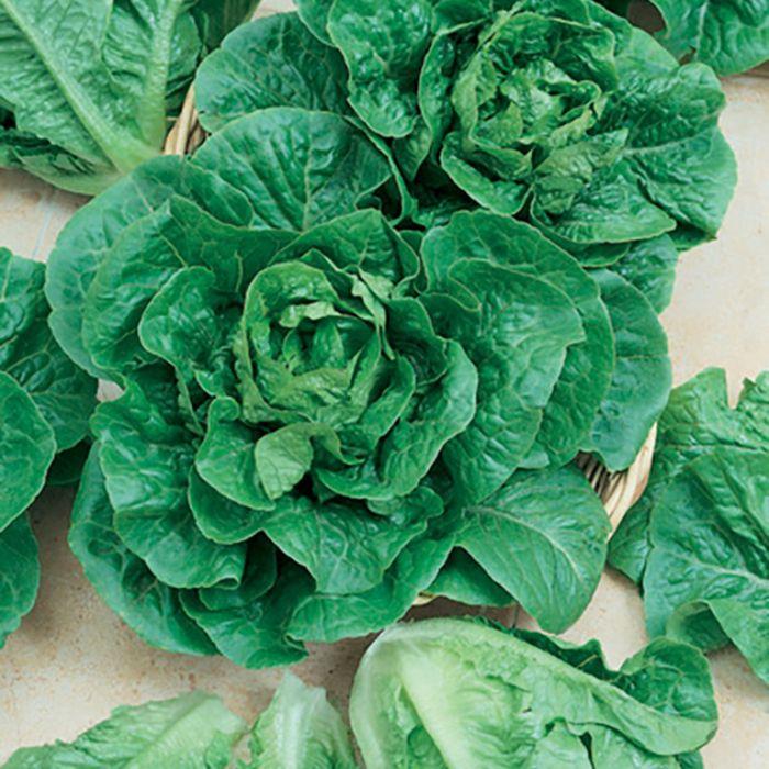 Lettuce Cos  ] 8433401002P - Flower Power