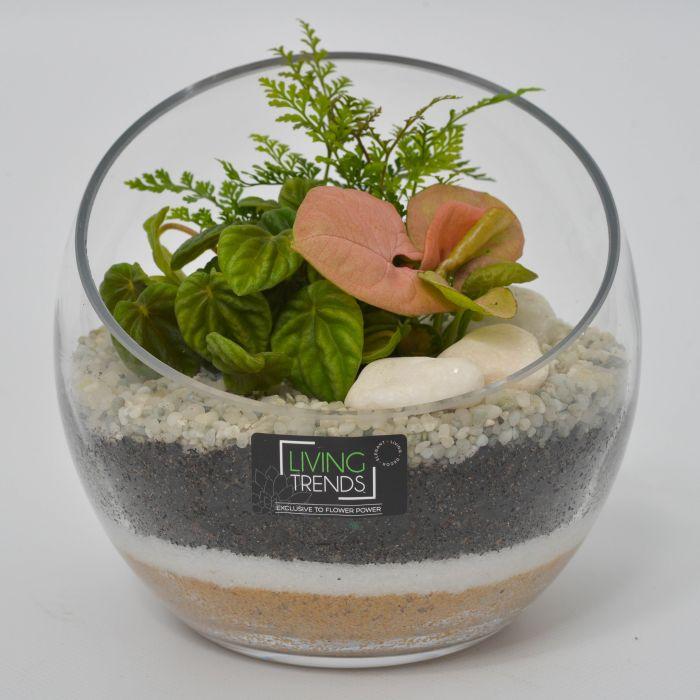 Living Trends Diagonal Cut Glass Terrarium  ] 9003239999 - Flower Power