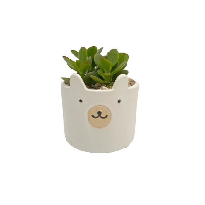 Living Trends Bear Planter  ] 9034389999 - Flower Power