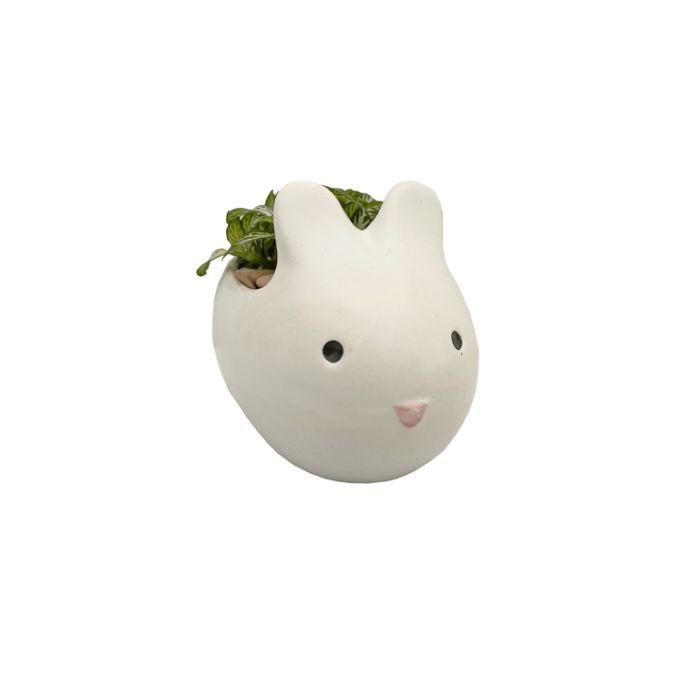 Living Trends Bunny Planter  ] 9034429999 - Flower Power