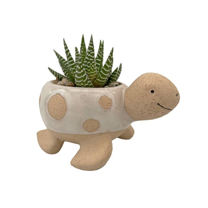 Living Trends Assorted Turtle Planter  ] 9035499999P - Flower Power