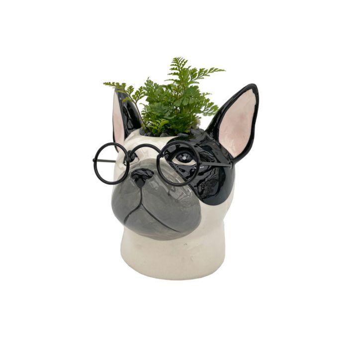Living Trends Bull Dog with Glasses Planter  ] 9036559999 - Flower Power