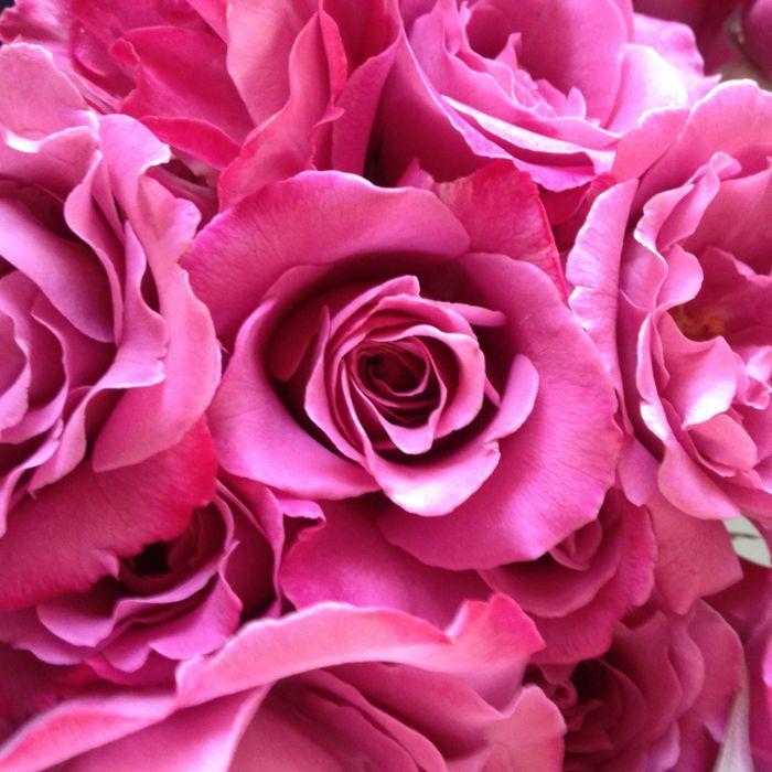 Angel Face Rose Standard  ] 9040910250 - Flower Power