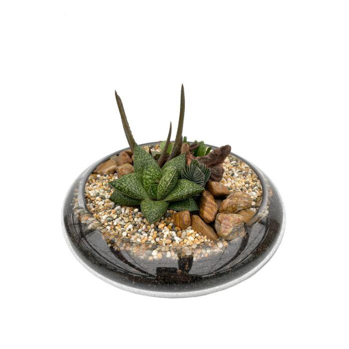 Living Trends Floating Glass Garden  ] 9042419999 - Flower Power