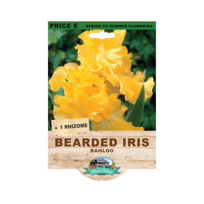 Bearded Iris Bahloo  ] 9315774073541 - Flower Power