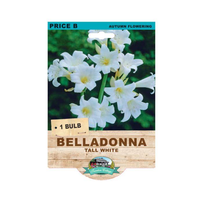 Belladonna Tall White  ] 9315774074296 - Flower Power