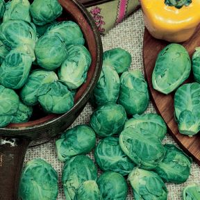 Brussels Sprouts  ] 1362631006P - Flower Power