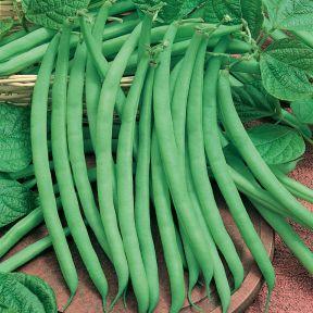 Beans Climbing  ] 1384651006P - Flower Power
