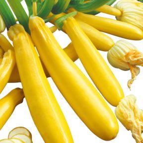 Zucchini Buckingham  ] 1539370100 - Flower Power