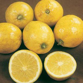 Lemonade Pipsqueak  ] 164503P - Flower Power