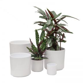SK Las Vegas Shiny Cylinder Pot White  ] 4006063280508P - Flower Power