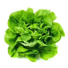 Lettuce Butterhead  ] 8433201002P - Flower Power
