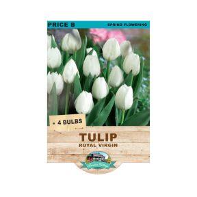 Tulip Royal Virgin  ] 9315774071684 - Flower Power