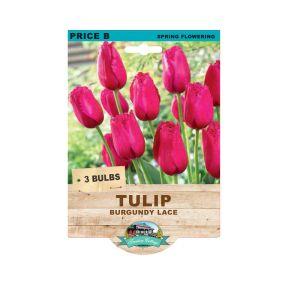 Tulip Burgundy Lace  ] 9315774073435 - Flower Power