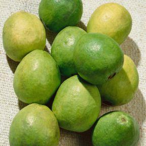 Guava Hawaiian  ] 9326974048963 - Flower Power