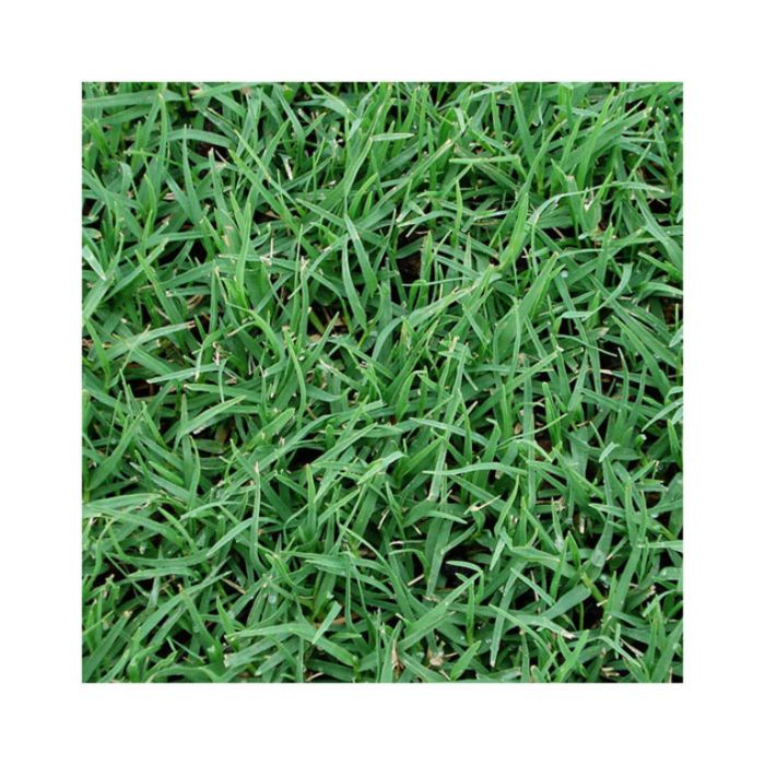 Kikuyu Turf Delivery Only  ] 105981 - Flower Power