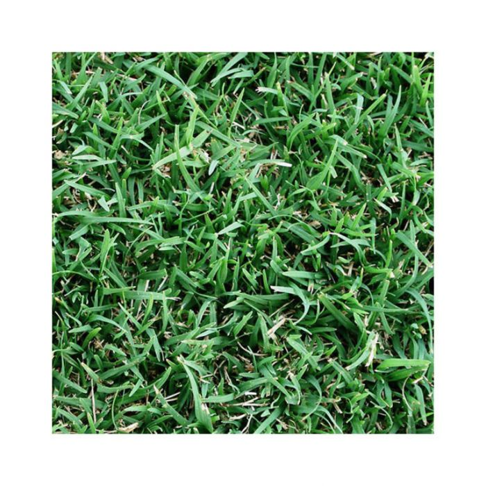Couch Greenlees Turf Delivery Only  ] 105987P - Flower Power