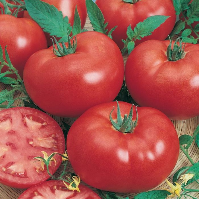 Tomato Grosse Lisse  ] 1362941001P - Flower Power