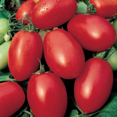 Tomato Roma  ] 1362961001P - Flower Power