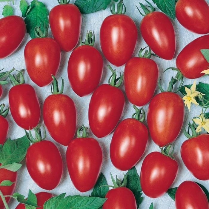 Tomato Grape  ] 1439550100P - Flower Power