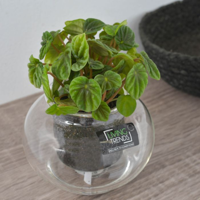 Living Trends Cup O Flora Terrarium  ] 1673029999P - Flower Power