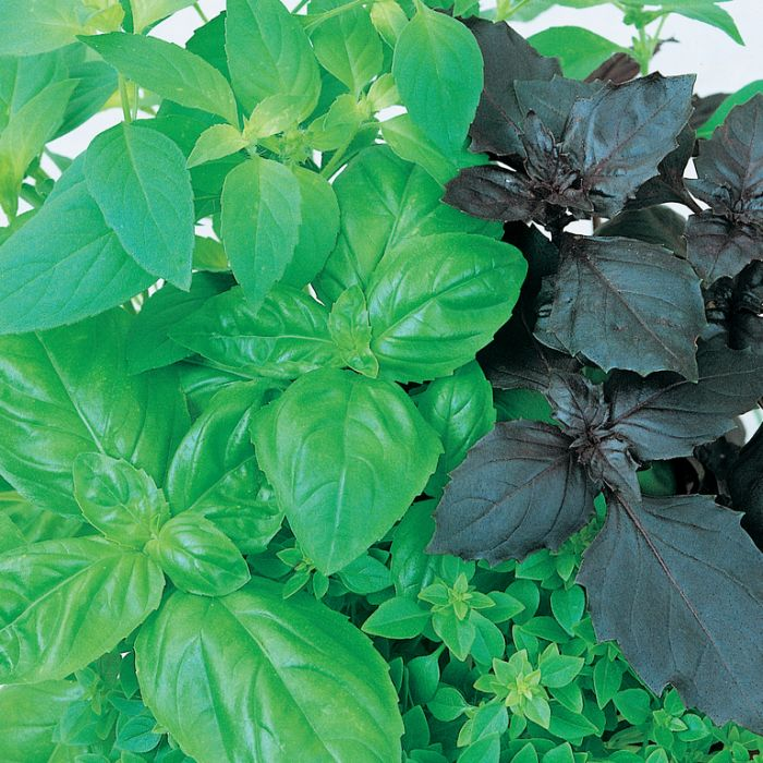 Basil 10 Variety Mix  ] 1674331003 - Flower Power