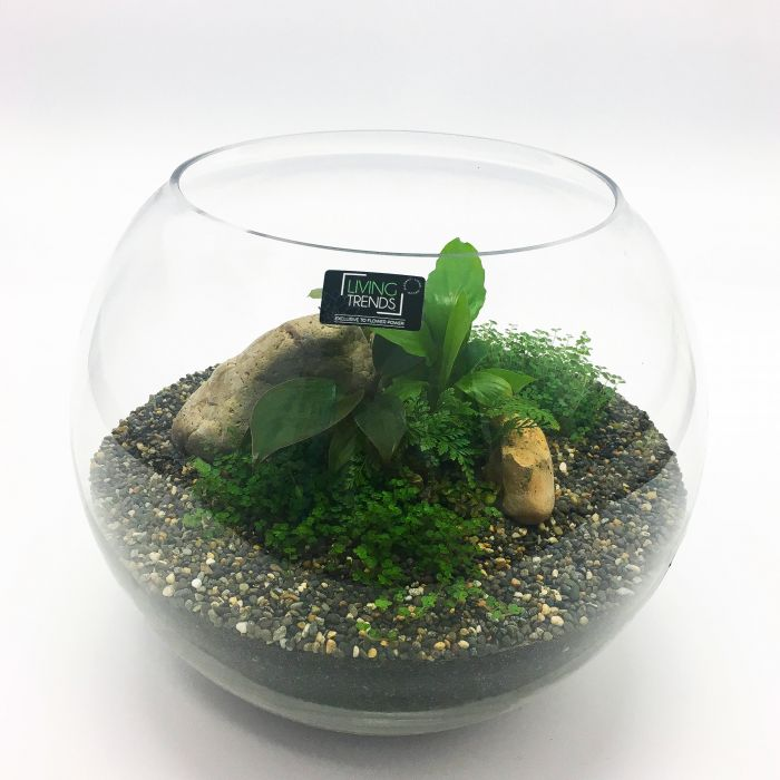 Living Trends Round Glass Terrarium  ] 1680979999 - Flower Power