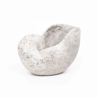 FP Collection Atlantis Snail Shell  ] 172786 - Flower Power