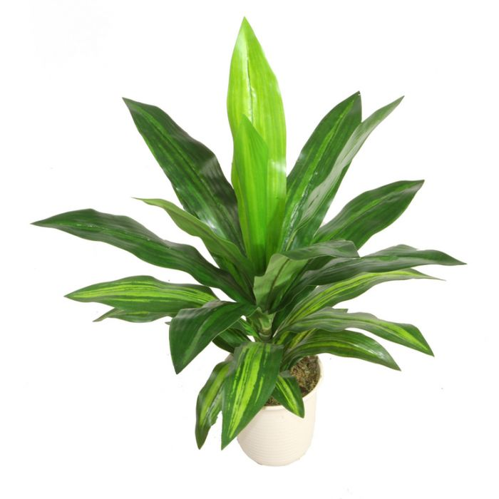 FP Collection Artificial Dracaena  ] 172824 - Flower Power