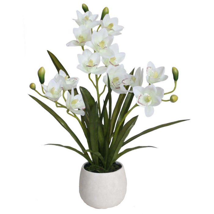 FP Collection Artificial Cymbidium Orchid  ] 172829 - Flower Power