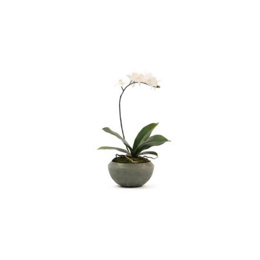 FP Collection Artificial Phalaenopsis Stone Pot Single Stem  ] 175512 - Flower Power