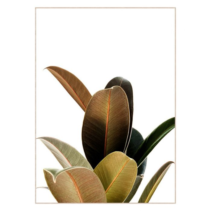 FP Collection Ficus Canvas Wall Art  ] 175678 - Flower Power