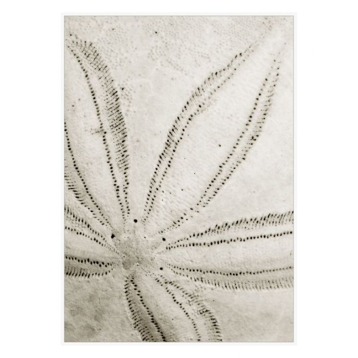 FP Collection Sand Dollar Canvas Wall Art  ] 176784 - Flower Power