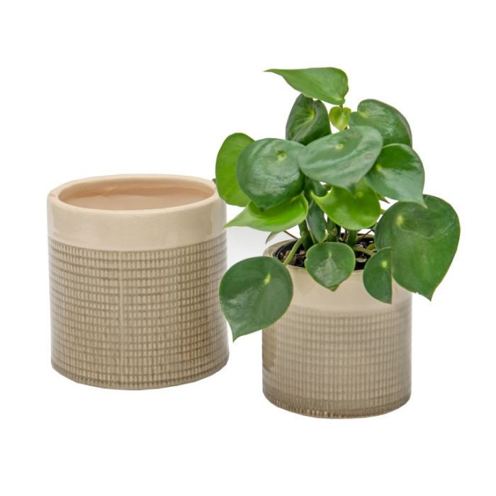 FP Collection Abel Planter Sage  ] 184021P - Flower Power
