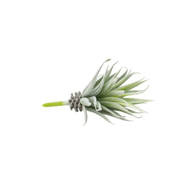 FP Collection Artificial Agave Stem  ] 184467 - Flower Power