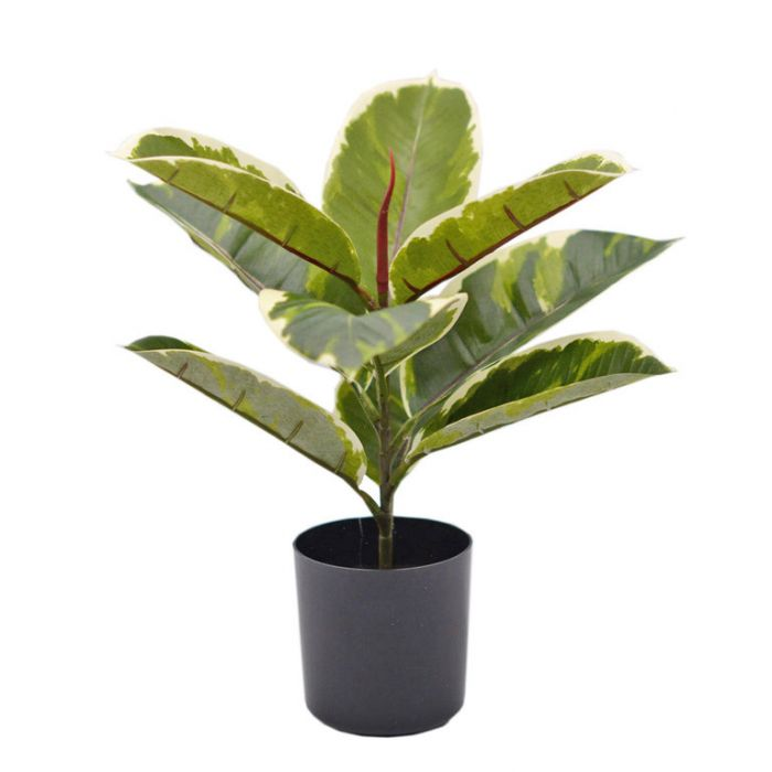 FP Collection Artificial Potted Ficus Varigated Plant  ] 184476 - Flower Power