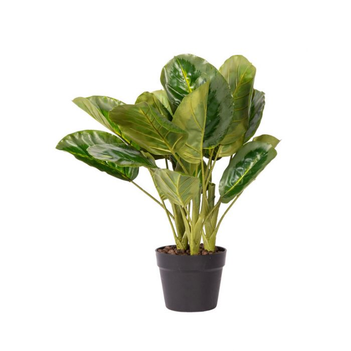 FP Collection Artificial Calathea Potted  ] 184794 - Flower Power