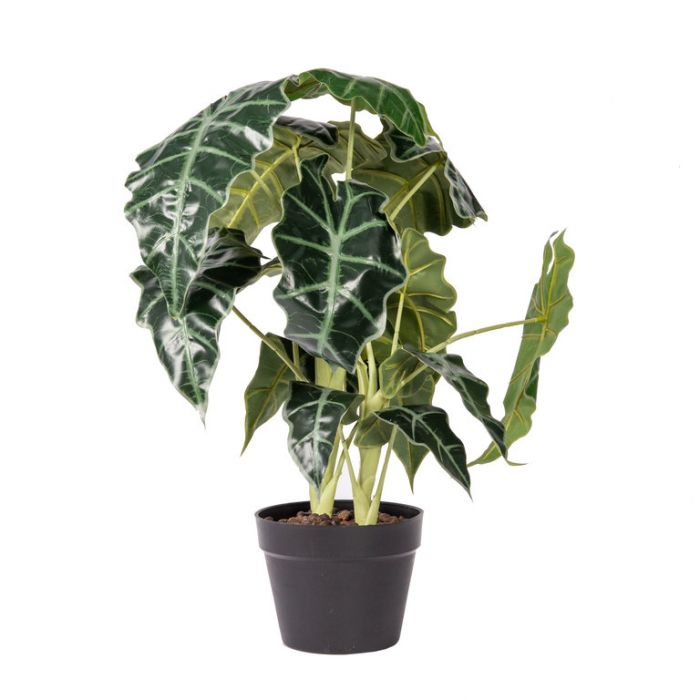 FP Collection Artificial Alocasia Potted  ] 184806 - Flower Power