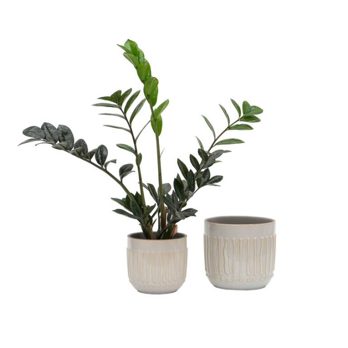 FP Collection Alma Planter  ] 186613P - Flower Power