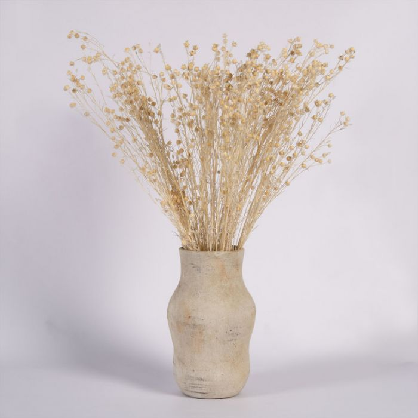 Dried Hypericum Cream  ] 188008 - Flower Power