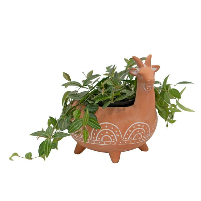 Acapulco Billy Goat Planter  ] 188335 - Flower Power