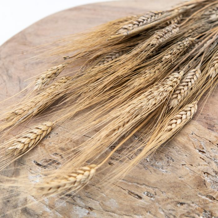 Dried Wheat Natural  ] 189766 - Flower Power