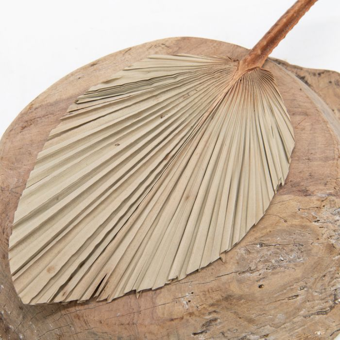 Dried Spear Palm Large  ] 189776 - Flower Power